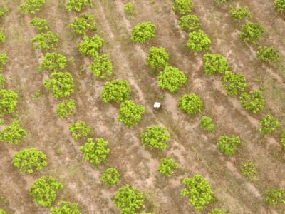 ROBOT TERRESTRE AGRICOLA